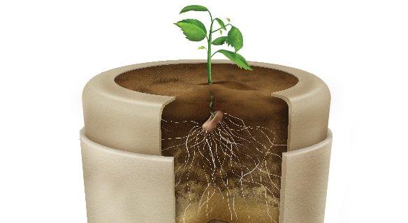 Bio-urna. Foto – Bios