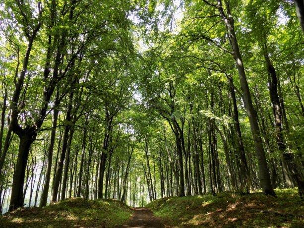Cestou k národnej prírodnej rezervácii Kyjovský prales