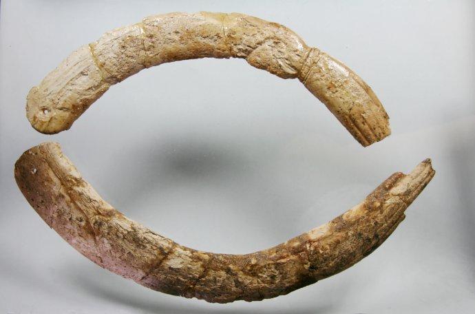 Pár kostených klapačiek. Klapačky patria medzi najstaršie rytmické nástroje v starom Egypte, pripisoval sa im však aj magický význam. Foto – Nadácia Aigyptos