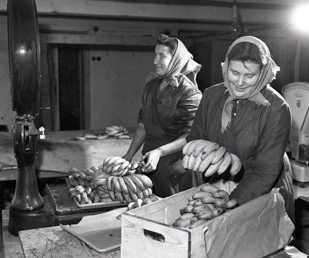 Pracovníčky dozrievacieho skladu banánov v Zohore Štefánia Mikušová a Emília Zajíčková pri vážení a balení dozretých banánov na expedovanie na vianočný trh | Foto - Archív TASR, autor K. Cích, 5. decembra 1959