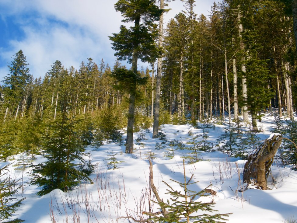 Aj tento pestrý les pod Hiadeľským sedlom bude patriť do rezervácie. Foto – Soňa Mäkká