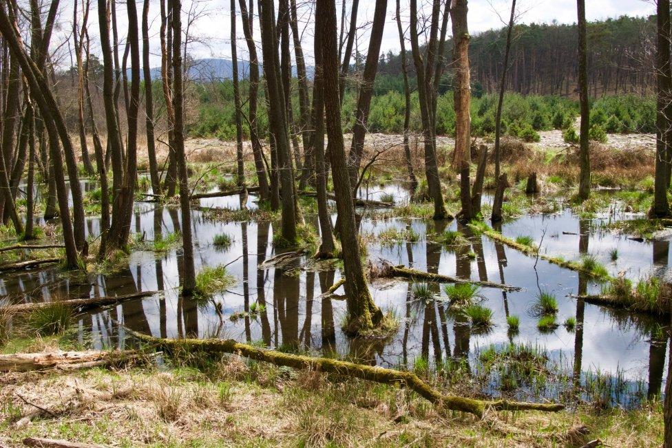 Nezregulované úseky Rudavy dotvára bobor. Foto – Soňa Mäkká
