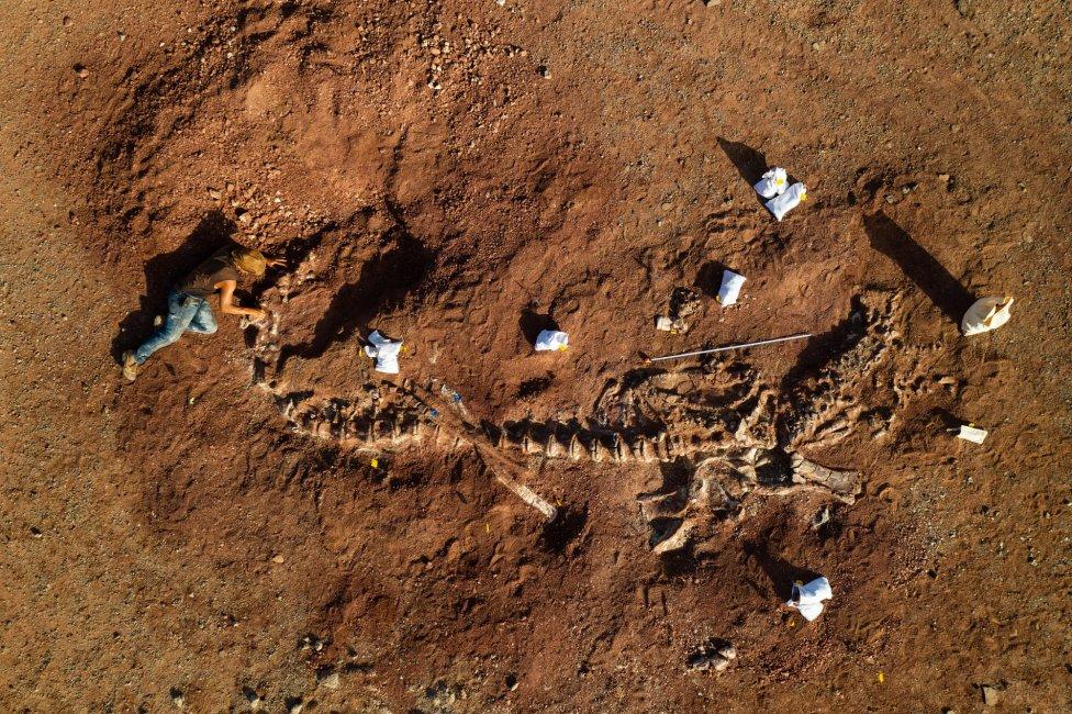 Výskumník zo Seranovho tímu čistí kostru 18-metrového dinosaura. Foto – Washington Post/Matthew Irving