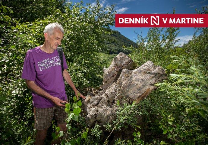 Ján Topercer na brehu Váhu, kde sa príroda spamätáva zo zásahu diaľničiarov. Foto N - Tomáš Benedikovič