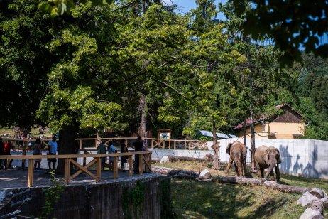 Návštevníci sa na slony v novom pavilóne dívajú z nadhľadu a majú o nich dokonalý prehľad. Foto N – Tomáš Hrivňák