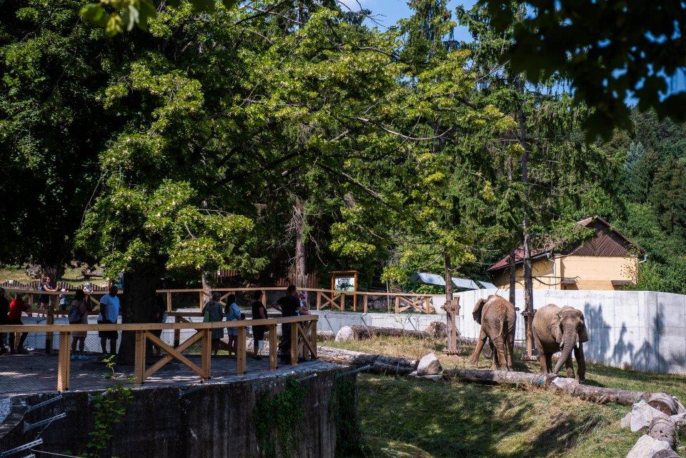 Návštevníci sa na slony v novom pavilóne dívajú z nadhľadu a majú o nich dokonalý prehľad. Foto N - Tomáš Hrivňák