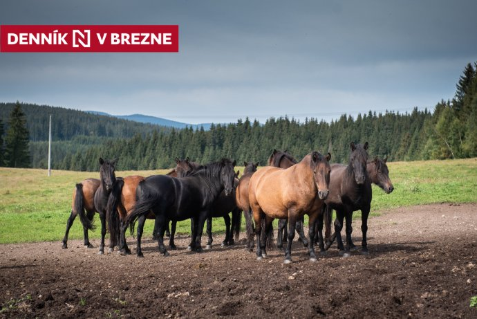 Hucule na farme Sihla. Foto N – Tomáš Hrivňák
