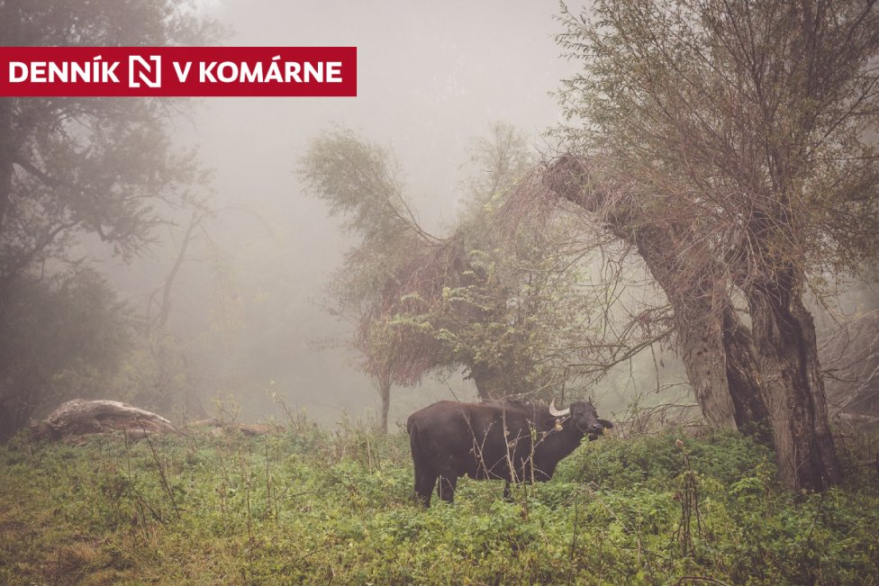 Vodný byvol. Foto - Marek Jánoš